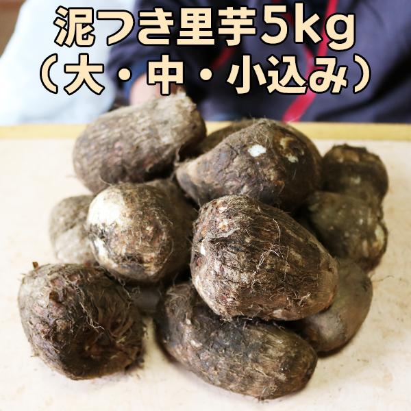 【森下農園】採れたて 里芋 5kg